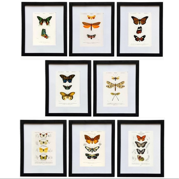 8 Framed Vertical Butterfly Prints